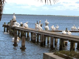 Colder temperatuers in Sebastian, Florida.
