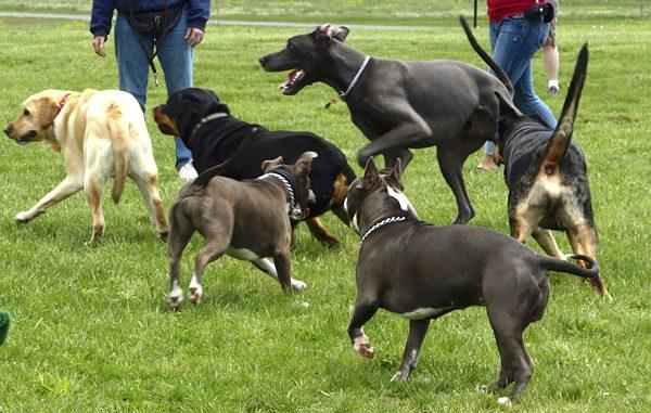 Riverside Park Dog Event