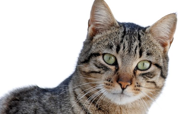Humane Soceity offering $1 cat neuter surgeries in Vero Beach.