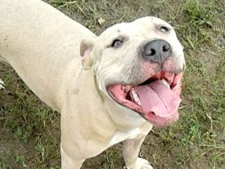 Indian River County Sheriff's deputy shoots dog in Gifford.