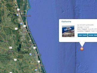 Katharine, a great white shark, makes a visit near Vero Beach.