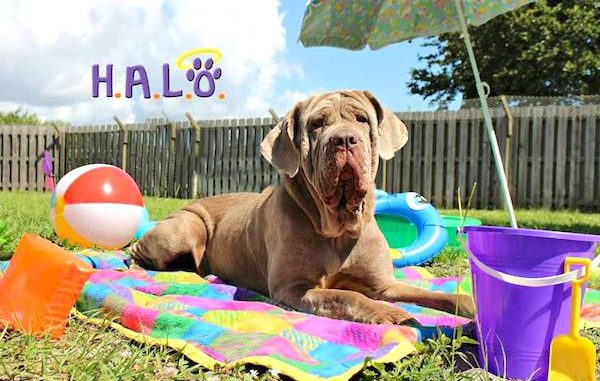 Vero Beach event to pamper our pets with H.A.L.O. and A Pampered Life.