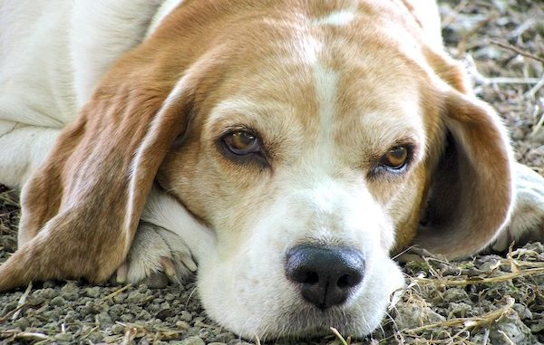 Florida has seen its first dog flu outbreak.