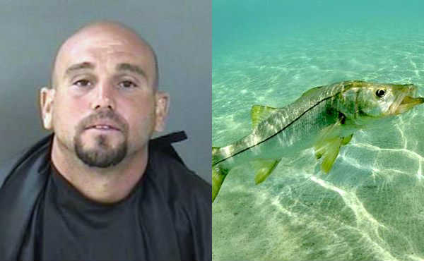A man tried to avoid an arrest in Sebastian by bringing back to life a Snook during its off-season.