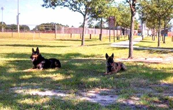 Trial begins for Sebastian Police K-9 death.