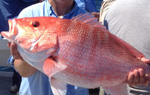 Anglers can help FWC during red snapper season in Sebastian and Vero Beach.