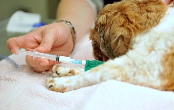 Rabies vaccine in Vero Beach.