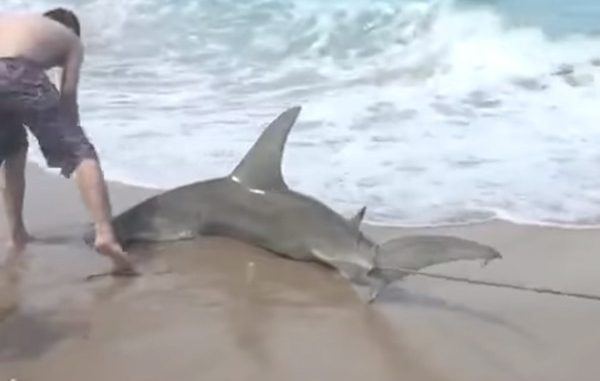 The FWC is gathering public input on shore-based shark fishing.