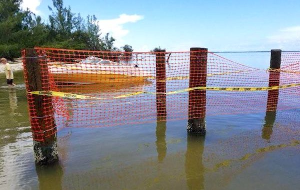 The state has removed a small dock built on an island near Sebastian.