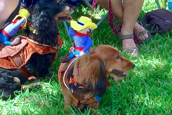 4th Annual Running Of The Wieners in Sebastian, Florida.