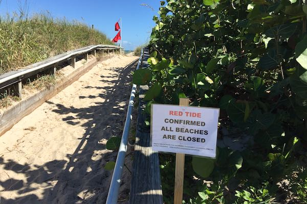 Red Tide at Indian River County beaches.