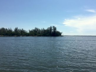 Red Tide tested positive in two small areas of the Indian River Lagoon.