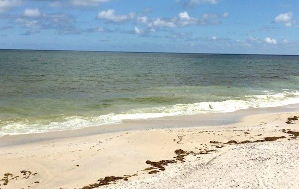 Red Tide may be moving closer to Sebastian, Florida.