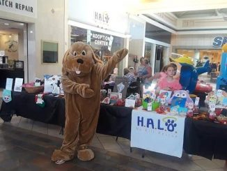 HALO's Artisans at the Mall Arts & Crafts Event in Vero Beach, Florida.