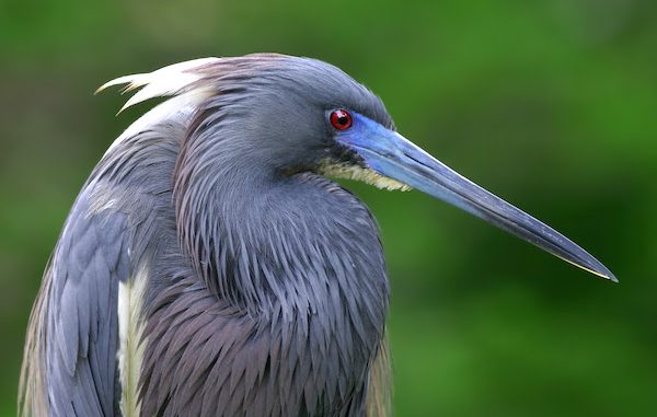 FWC approves new guidelines for bird species.