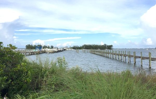 A body of a man was found in the river near Squid Lips in Sebastian, Florida.