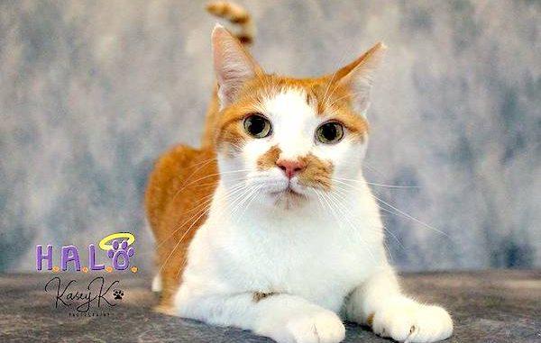 Help Kit Kat find a home.