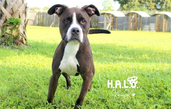 Mary Puppins has been at the Halo Rescue No-Kill Shelter since June 2018.