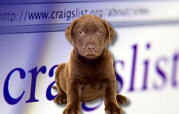 Craigslist ad showing puppies for sale in Sebastian and Vero Beach, Florida.