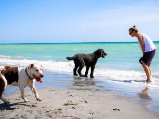 Beware of saltwater poisoning in dogs.