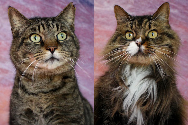 Kitties Oscar & Betty Lou