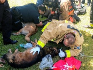 For The Love Of Paws is buying Pet Emergency Oxygen Kits for firehouses in Indian River County.