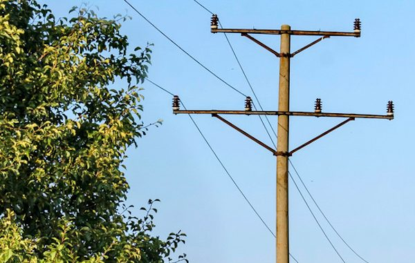 A tree trimmer died Tuesday after being electrocuted by a live power line in Sebastian, Florida.