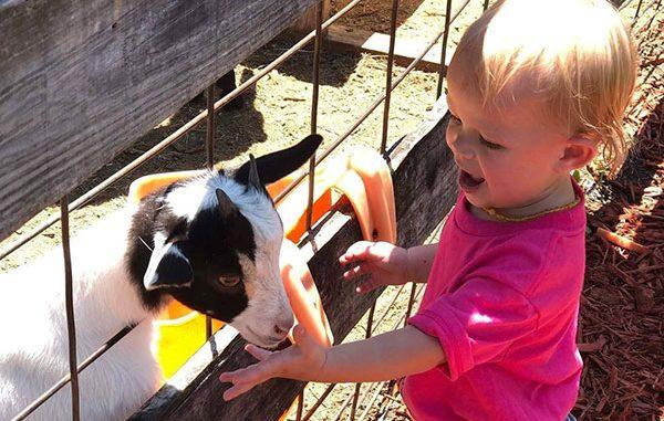 LaPorte Farms is hosting a Grandparents Raising Grandkids Fun Day in Sebastian, Florida.