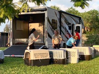 83 dogs that were saved in Grand Bahama arrived at HALO No-Kill Rescue in Sebastian, Florida.