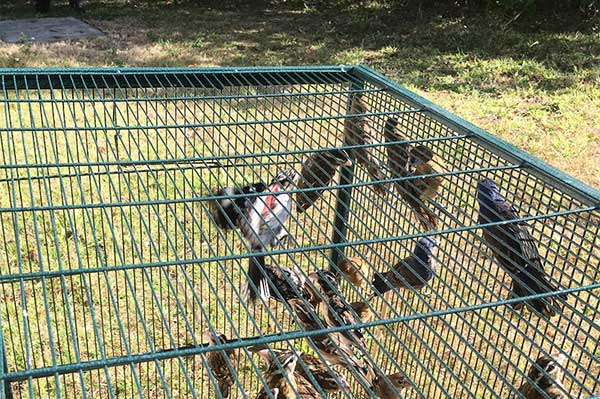 Trapping songbirds is now illegal in Florida.