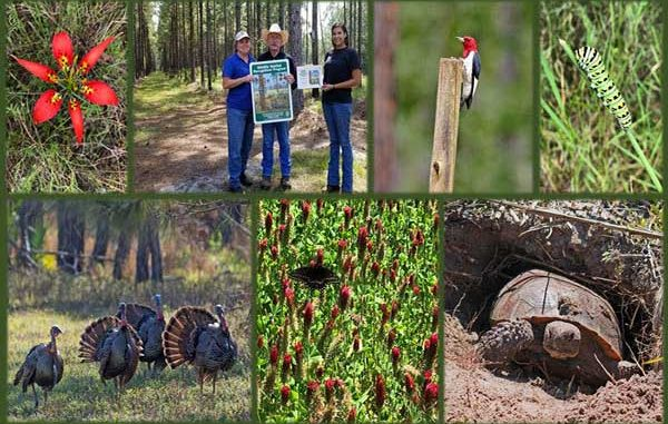 FWC develops the Wildlife Habitat Recognition Program.