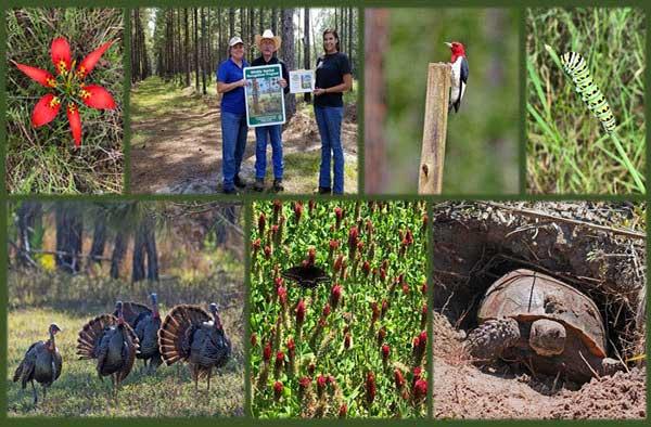 FWC develops the Wildlife Habitat Recognition Program.