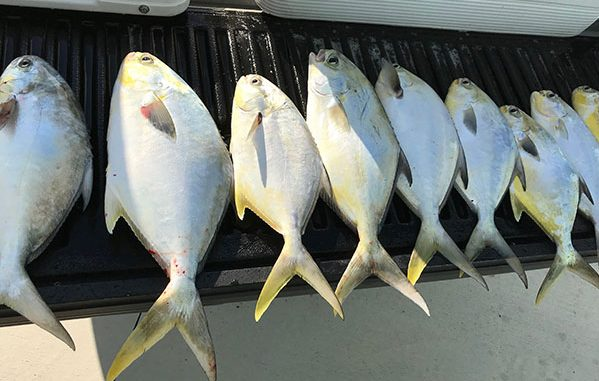 Pompano fish at Sebastian Inlet.