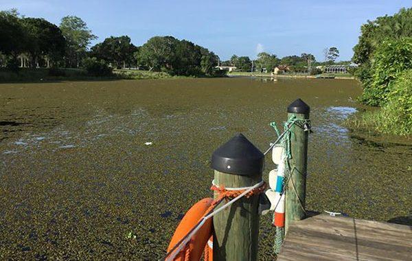 Canal near Hardee Park in Sebastian, Florida.