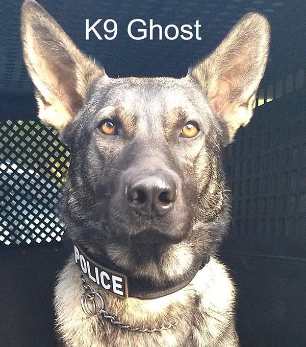 Sebastian Police K9 Ghost