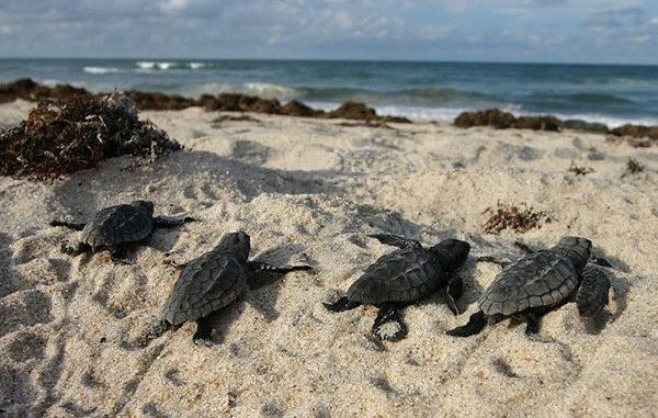 Seat Turtles