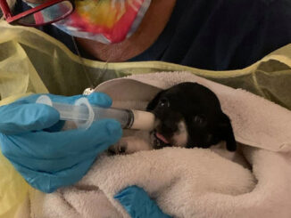 Several dogs were left abandoned in Vero Beach.