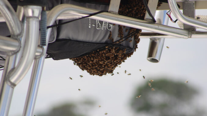 Honey Bees on Boat
